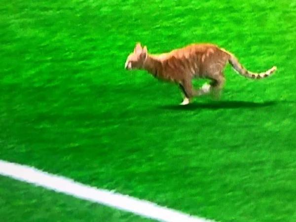 قط يثير الجدل ويمنع تنفيذ ضربة جزاء في مباراة المغرب التطواني والوداد (فيديو)