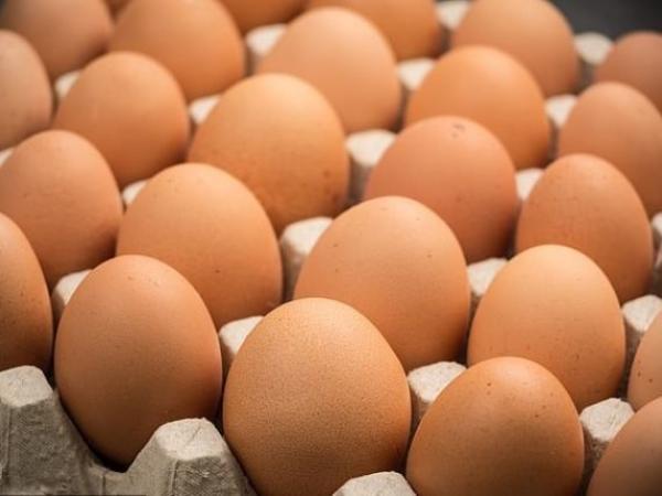عاملة أمام القضاء بتهمة سرقة 16 بيضة من معمل مملوك لبرلماني
