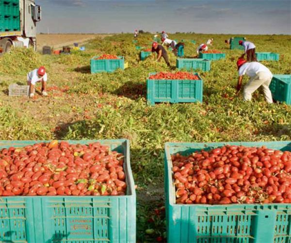 فرصة للمغاربة... مطلوب 30 ألف عامل جديد بإيطاليا والتسجيل مفتوح