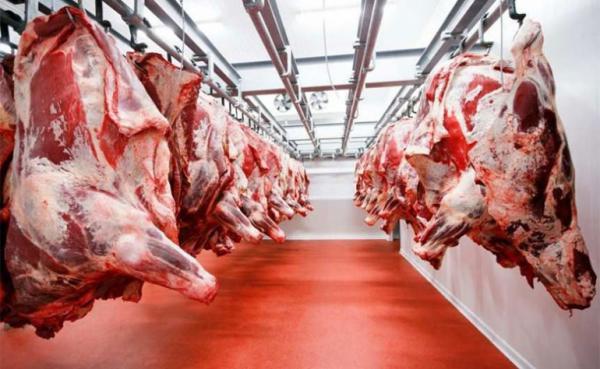 سطات: إنتاج 20 ألف طن من اللحوم الحمراء سنويا