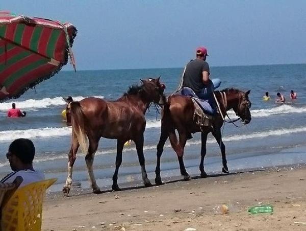 حصانان هائجان يروعان مرتادي شاطئ مارتيل ويصيبان 4 أطفال بشكل بليغ
