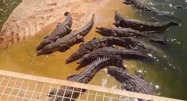 """فضاء حديقة """"كروكوبارك""""- أكادير يزدان ب 26 من صغار أكبر ثعبان في العالم"""
