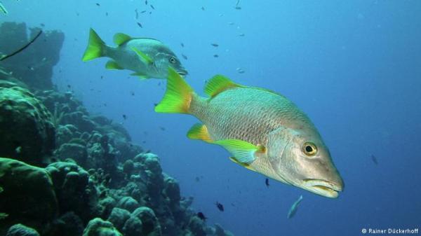 اختبار مرآة يكشف قدرات ذهنية مدهشة للأسماك.. فما هي؟