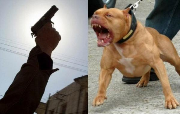 إطلاق نار من أجل إيقاف أشخاص حرضوا كلبا شرسا على أفراد دورية أمنية