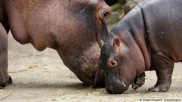 لم تجد حديقة الحيوان اسماً للمولود الجديد فلجأت لهذا الأسلوب!