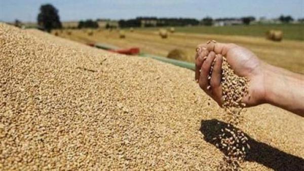 الحكومة ترفع رسوم استيراد القمح الطري لهذه الأسباب