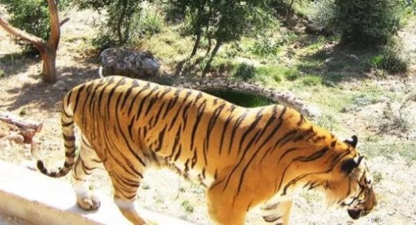 بسبب كورونا.. حديقة حيوان إندونيسية قد تضطر لذبح بعض حيواناتها لإطعام أخرى