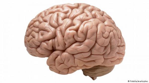 هل تؤثر زيادة الوزن على المخ؟