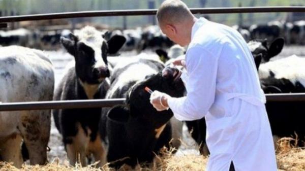 """""""أونسا"""" يعزز برنامجه الوقائي ضد أهم الأمراض الحيوانية المعدية"""