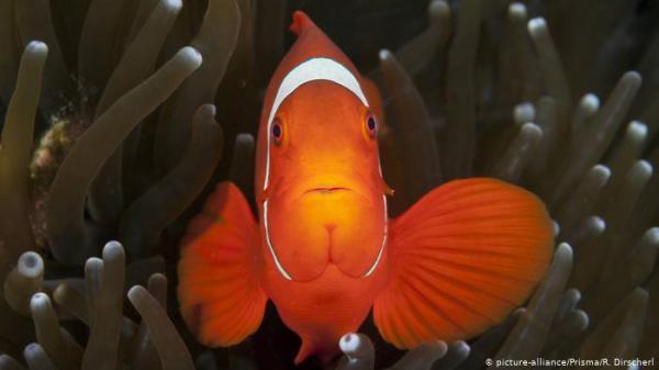 دراسة: التلوث الضوئي يهدد تكاثر سمكة شهيرة