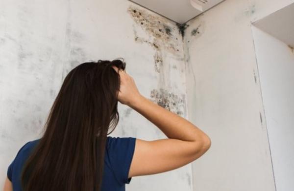 أسباب ظهور عفن الجدران وطرق التخلص منه