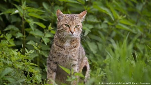 """قطة ضُبطت متلبسة بـ""""تهريب مخدرات"""" تفر من السجن"""