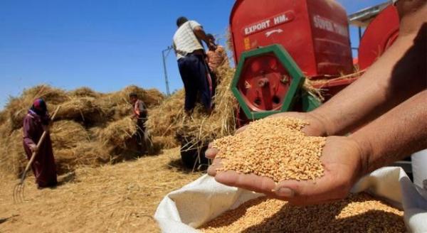 وزارة الفلاحة تعلن عن تدابير تحفيزية لتسويق الإنتاج المغربي من الحبوب