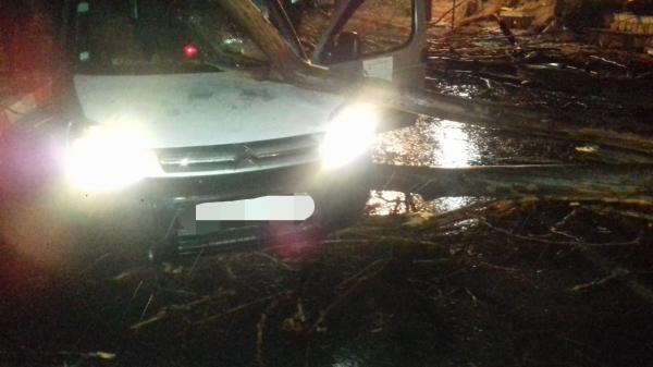 عاصفة رعدية تتسبب في سقوط شجرة كبيرة على سيارة خفيفة (صور)