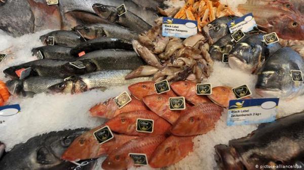 تناول بعض أنواع الأسماك في فترة الحمل يمكن أن يشكل خطرا على صحة الجنين
