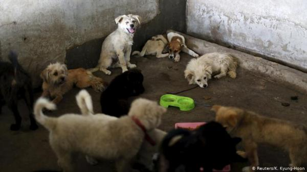 لبنان..حتى القطط والكلاب لم تسلم من الانهيار الاقتصادي