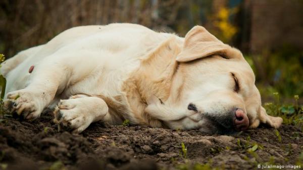 بالفيديو..كلبة وفية تنتظر صاحبها أمام المستشفى ستة أيام حتى خروجه