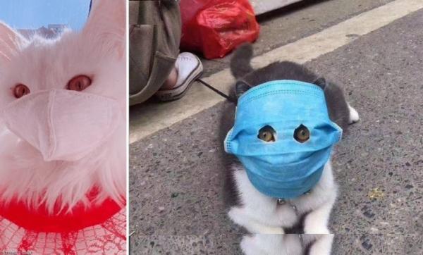 """خوفا من """"كورونا""""..صينيون يضعون الأقنعة الطبية الواقية على وجوه قططهم الأليفة"""