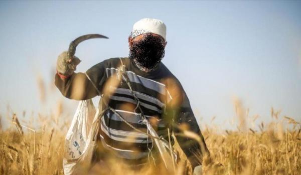 تاونات: فلاح يقتل شقيقه بمنجل لسبب تافه