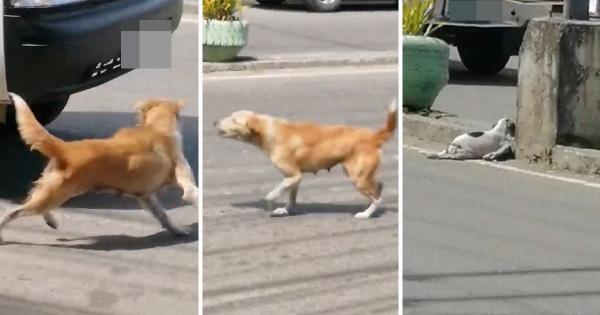 بالفيديو .. كلبة أم تحاول إيقاف السيارات طلبا لمساعدة جروها المصاب