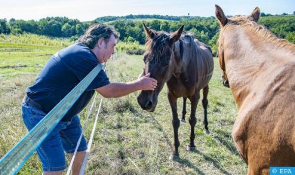 لغز الخيول المشوهة الذي يقض مضجع الفرنسيين