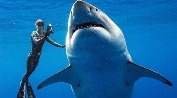 ضحية جديدة لهجوم أسماك القرش بأستراليا