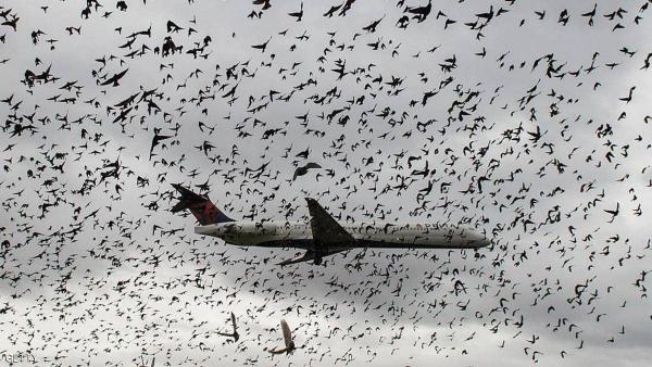 هل يمكن للطيور أن تكون سببا في إسقاط الطائرات؟