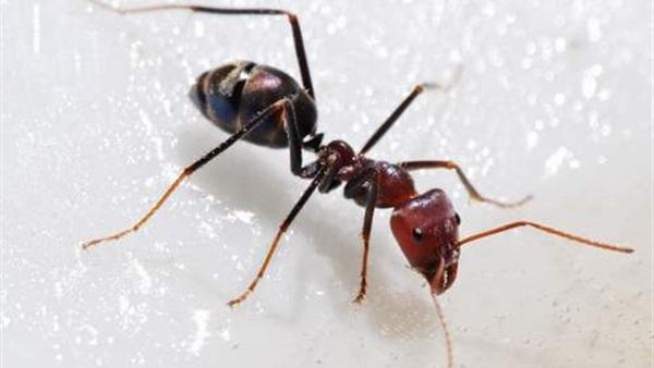 قصة النملة مع نبي الله سليمان