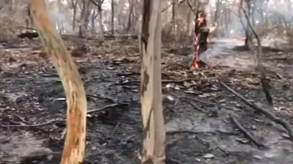 وأخيرا ..الأمطار بدأت في الهطول على حرائق الغابات في أستراليا