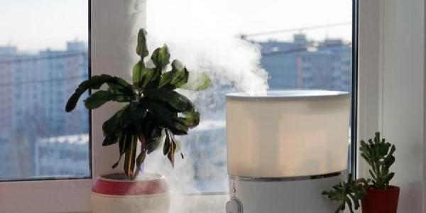 السموم داخل منزلك.. إليك 5 طرق بسيطة لمكافحتها