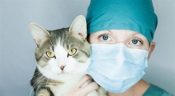 دراسة: الحيوانات الأليفة يمكن أن تصاب بفيروس كورونا المستجد