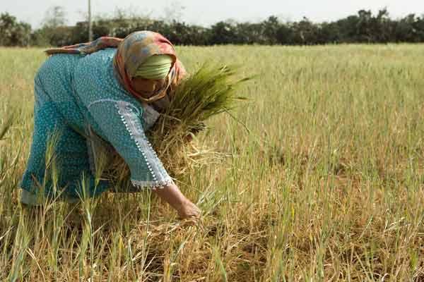 أخنوش: صرف 350 مليون درهم لفائدة الفلاحين المتضررين من الجفاف