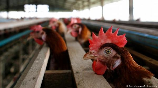 الإمارات تحظر استيراد الطيور الحية من  من المجر وسلوفاكيا