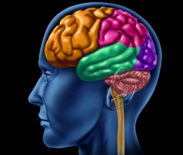 أغذية مفيدة تساهم في تحسن صحتك العقلية