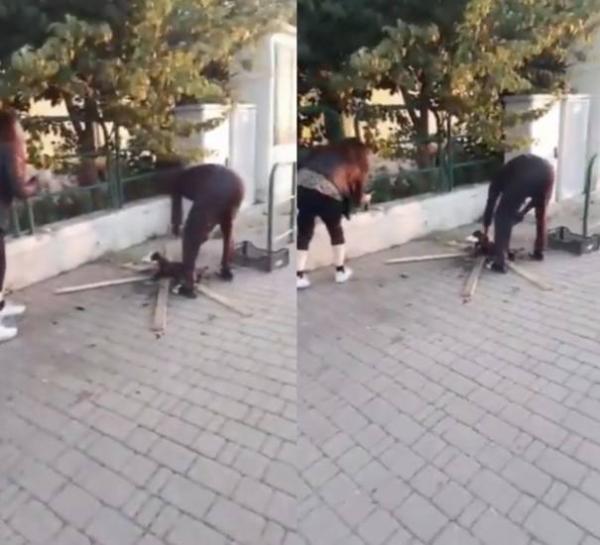 ضجة في ايطاليا بعد انتشار فيديو لمهاجر افريقي يشوي قطا في الشارع