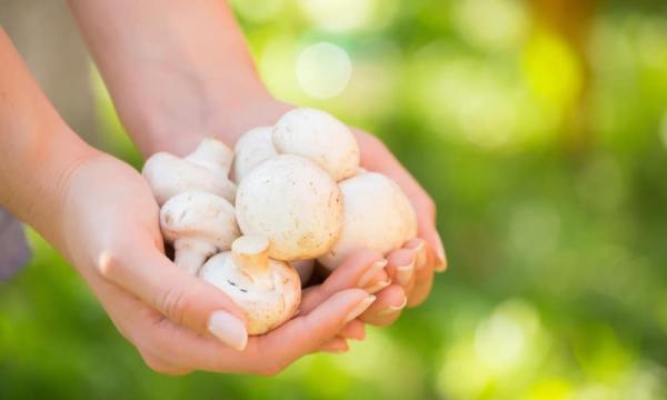 أغذية تساعد الانسان على الشعور بالسعادة