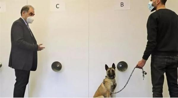الكلاب المدربة على رصد كورونا سلاح طبيب لبناني لمكافحة الجائحة