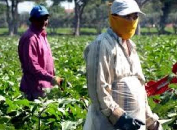 رغم كورونا: عمال موسميون مغاربة يلتحقون بالمزارع الإيطالية...