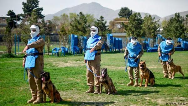 مناشدات لبايدن للتدخل لإجلاء عشرات الكلاب العالقة في كابول