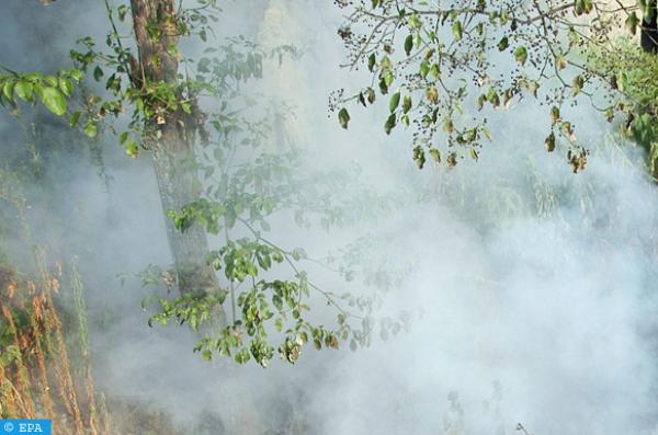 السلطات تستعين بطائرتين للسيطرة على حريق ضخم بغابة أوريكا