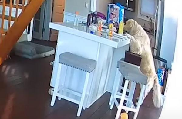 كلب جائع يتسبب في إشعال حريق بمنزل(فيديو)