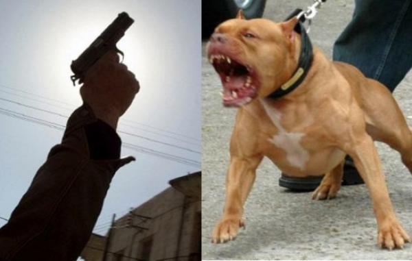"""رجال الأمن يستعينون بالمسدسات لتوقيف """"مجرم"""" حرض عليهم كلابا بوليسية"""