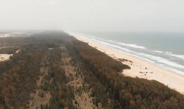 السنغال.. غابة من صنع الإنسان لمقاومة ظاهرة التصحر