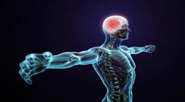 ماذا تعني الإشارات التي يرسلها الجسم؟