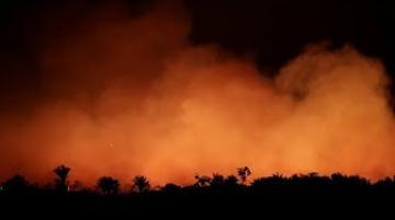 ضغوط دولية على الرئيس البرازيلي من أجل إنقاذ غابات الأمازون من الحرائق