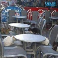 حال المقاهي في رمضان