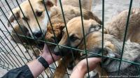 لماذا اختفت الحيوانات الأليفة من متاجر بريطانيا؟!