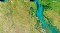 أمطار طوفانية تقتل نصف مليون بقرة في أيام بهذا البلد