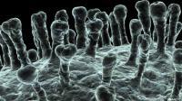 أي الجنسين يقاوم فيروس كورونا الفتاك بفعالية أكبر؟