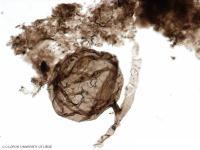 علماء يكتشفون أحفورة عمرها مليار سنة قد تفسر ظهور الحياة على الأرض